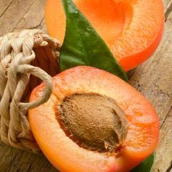 The Perfumers Apprentice - Apricot (TPA)